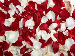 hechizos, amor, amarres, gratis, hechizos de amor, amarres de amor, conjuros de amor, sortilegios, brujería de amor, magia blanca, magia negra, videntes, recuperar un amor perdido, conseguir un amor imposible, vudu del amor, vudu amoroso, brujería amorosa, amarre de matrimonio, medium del amor