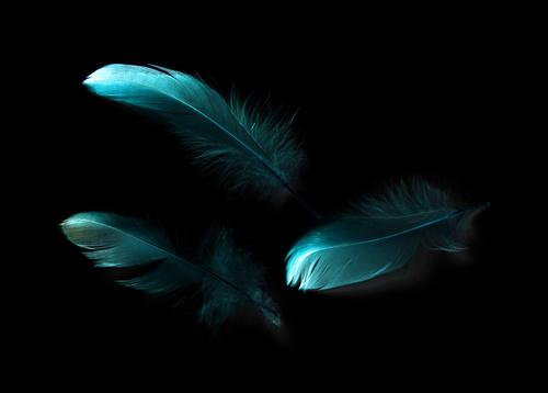 Hechizos de amor con gallo